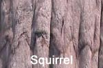 Squirrel fur image